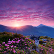 Pink flowers in the mountains — Stock Photo #23418410