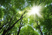 Sunrays in trees — Stock Photo