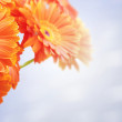 Bouquet of orange flowers — Stock Photo #28432757
