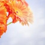 Bouquet of orange flowers — Stock Photo