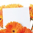 Message in the bouquet of gerber — Stock Photo