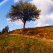 Rainbow over tree — Stock Photo