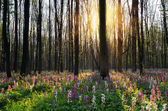 Spring flowers in a sunny forest — Stock Photo