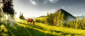 Horse on a summer pasture in the mountains — Stock Photo