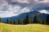 Tanne Wald in den Bergen — Stockfoto