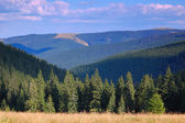 Coniferous forest in the mountains — Stock Photo