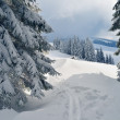 Ski track in the forest — Stock Photo