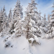 Tree in the snow — Stock Photo