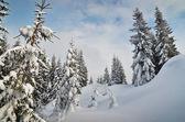 Invierno en el bosque de la montaña — Foto de Stock