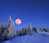 Full moon in winter — Stock Photo