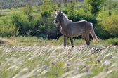 лошадь в поле — Стоковое фото