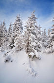 Tree in the snow — Foto Stock
