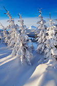Coniferous forest in winter — Stock Photo