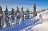 Coniferous forest in winter in mountains — Stockfoto
