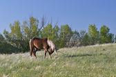 Stallion to pasture — Stock Photo
