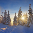 Sun rays in the trees under the snow — Stock Photo