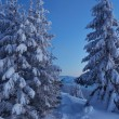 Stock Photo: Twilight in the winter forest