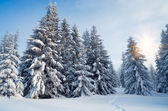 Trail in the winter forest — Stock Photo