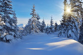Sunny day in winter — Stock Photo