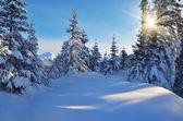 Zonnige dag in de winter — Stockfoto