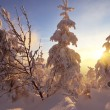 Winter sunset in the forest — Stock Photo