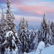 Evening in the winter forest — Stock Photo