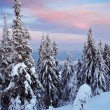Stock Photo: Evening in the winter forest