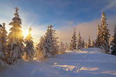 Sunny winter evening — Stock Photo