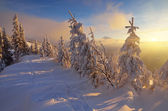 Sunlight in winter — Stock Photo