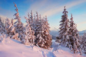 Trail in winter forest — Stock Photo