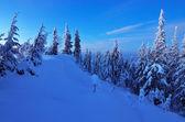 Twilight winter — Stock Photo