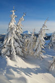 Snow-covered trees in the mountains — Stock Photo