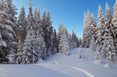 Trail in the snow in the forest — Stock Photo