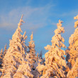 Bright colors snow — Stock Photo