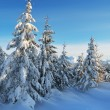 Fresh snow in the forest — Stock Photo