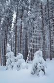 Forest under snow — Stock Photo