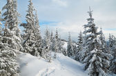 Trail in a mountain forest in winter — Stock Photo