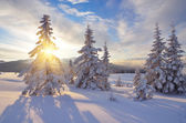 Słoneczny zimowy krajobraz — Zdjęcie stockowe