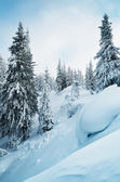Mountain forest in winter — Stock Photo
