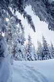 Camino en el bosque de la montaña — Stockfoto