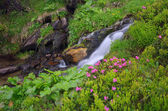Flowers by a mountain stream — Stock Photo