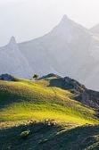 Sunlight Mountain  — Stock Photo