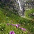 Flowers and waterfall — Stock Photo