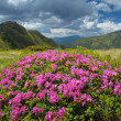 Lush meadow with flowers — Stock Photo #44376335