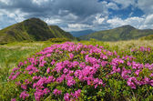 Lush meadow with flowers  — Stock Photo