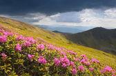 Kwiaty w górach — Zdjęcie stockowe