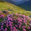 Постер, плакат: Meadow flowers in the mountains