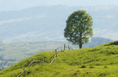 Tree on hill — Stock Photo