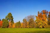 Dia ensolarado de outono — Fotografia Stock