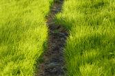 Sökväg i gräset — Stockfoto